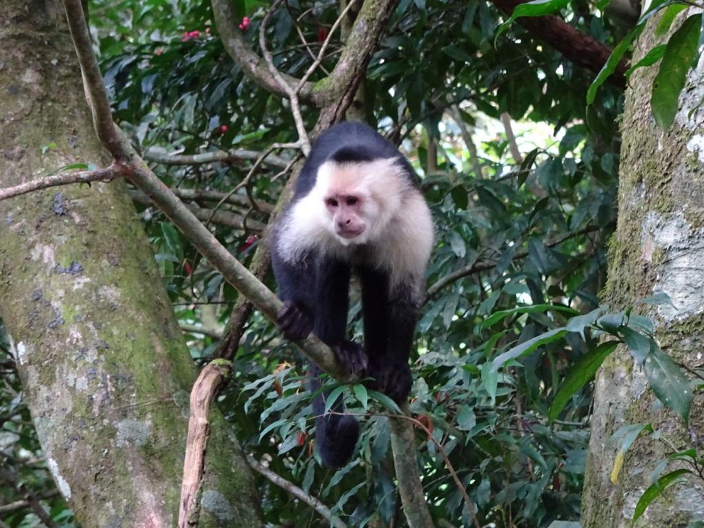 141121_Monkeys