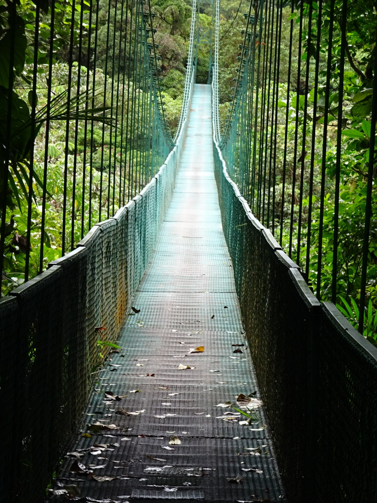 A bridge over the Cloud Forest - Beautiful!