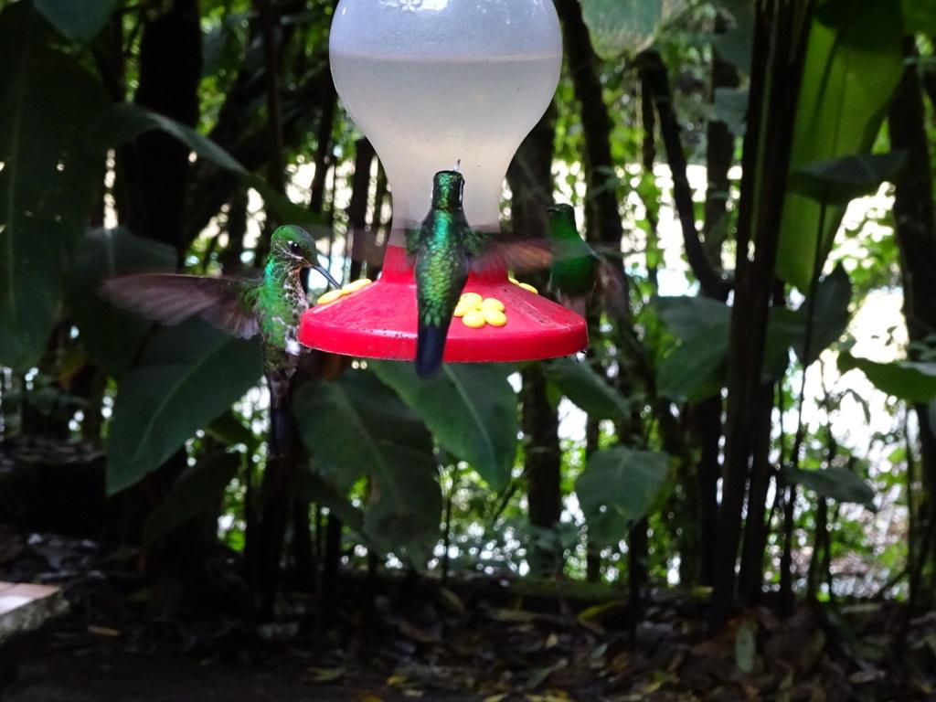 Selvatura Adventure Park, Monteverde, Costa Rica