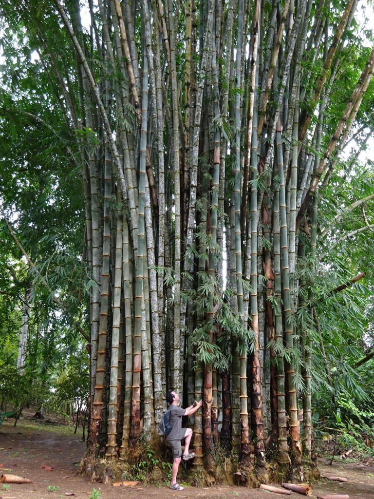 Now this is what we call some bamboo!