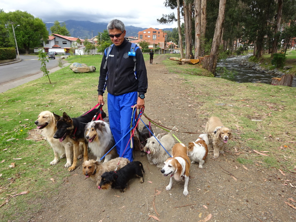 This is the only and only dog walker in Cuenca. He does four seperate runs a day.