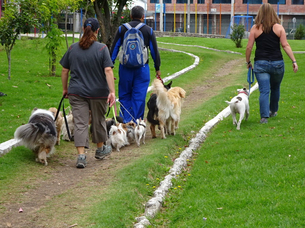 Even I got to help walk the dogs!
