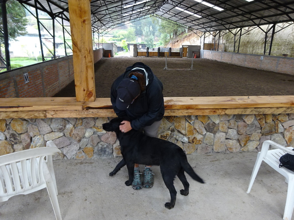 ??, Ecuador. Remember his NAME?? This lab was 100% muscle. He leaned in hard for a good pet. He goes on all the horse treks - trotting miles and miles happily every day.
