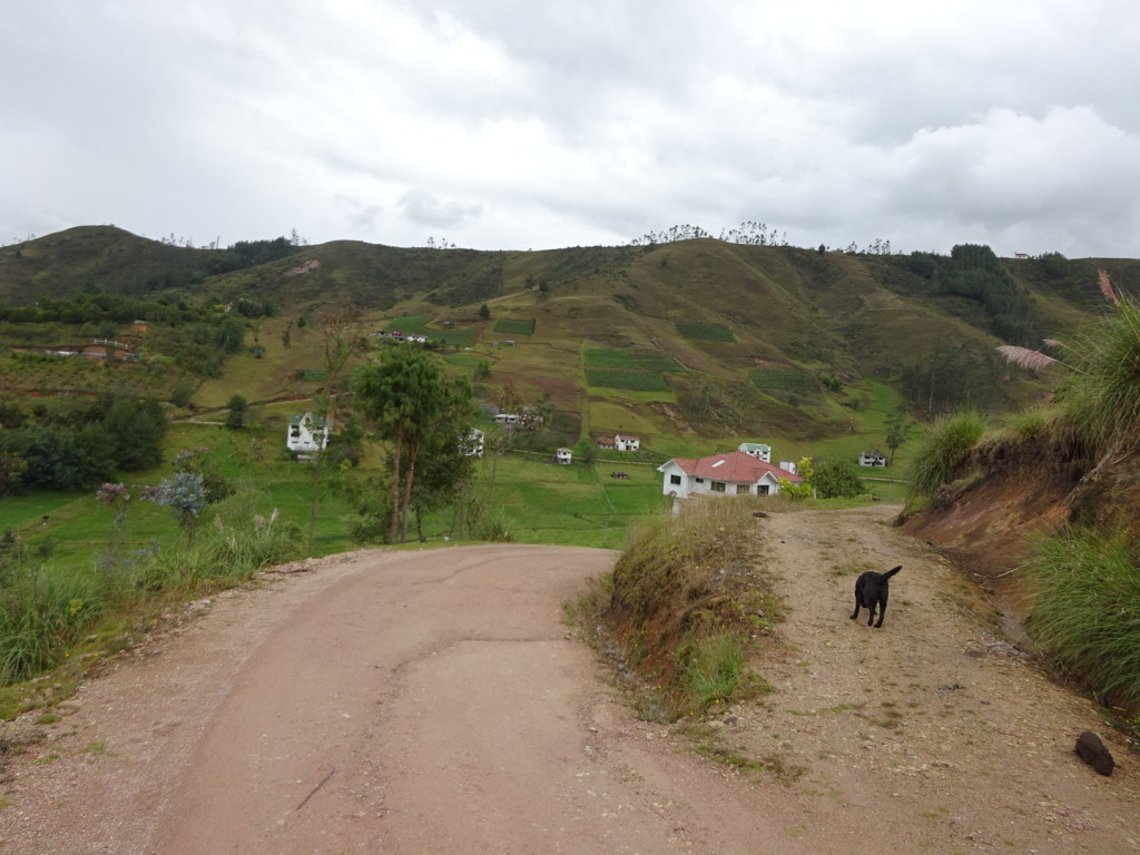 ??, Ecuador. Walking with us on the 2 hour horse trek.