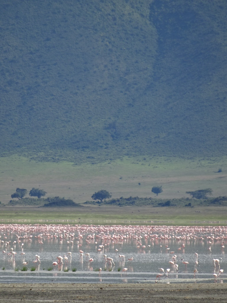 Let the flamingos...converge!