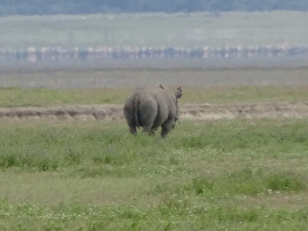 A rhino in the distance...
