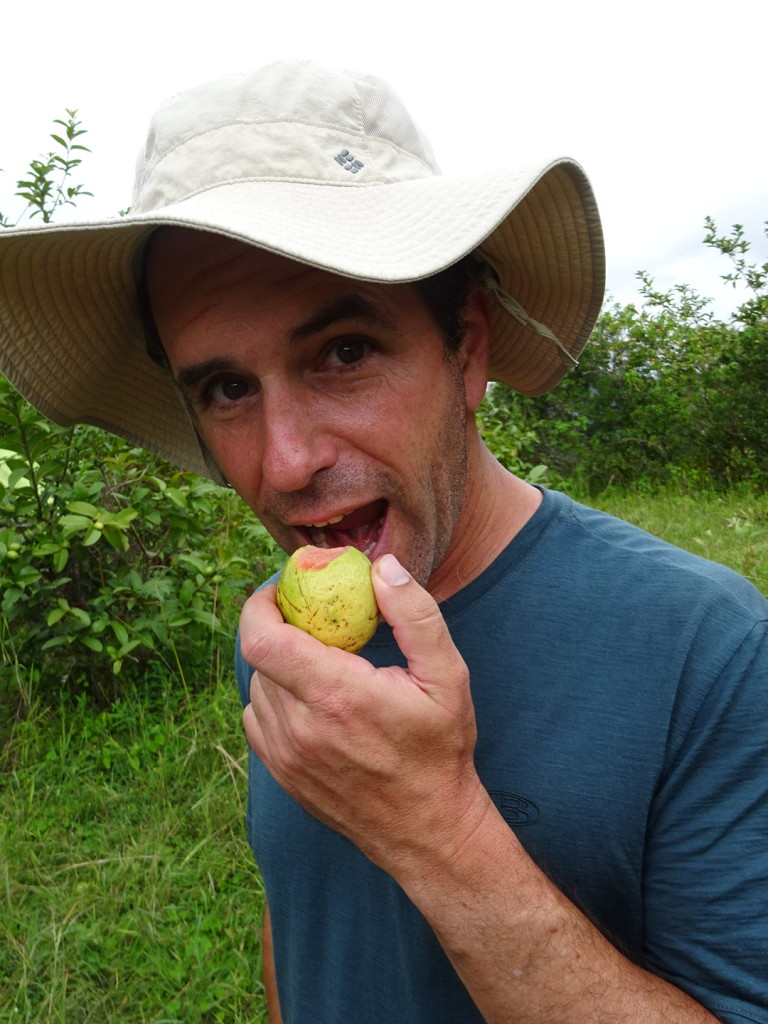 Aaron liked the guava, which was kind of apple-like in texture.