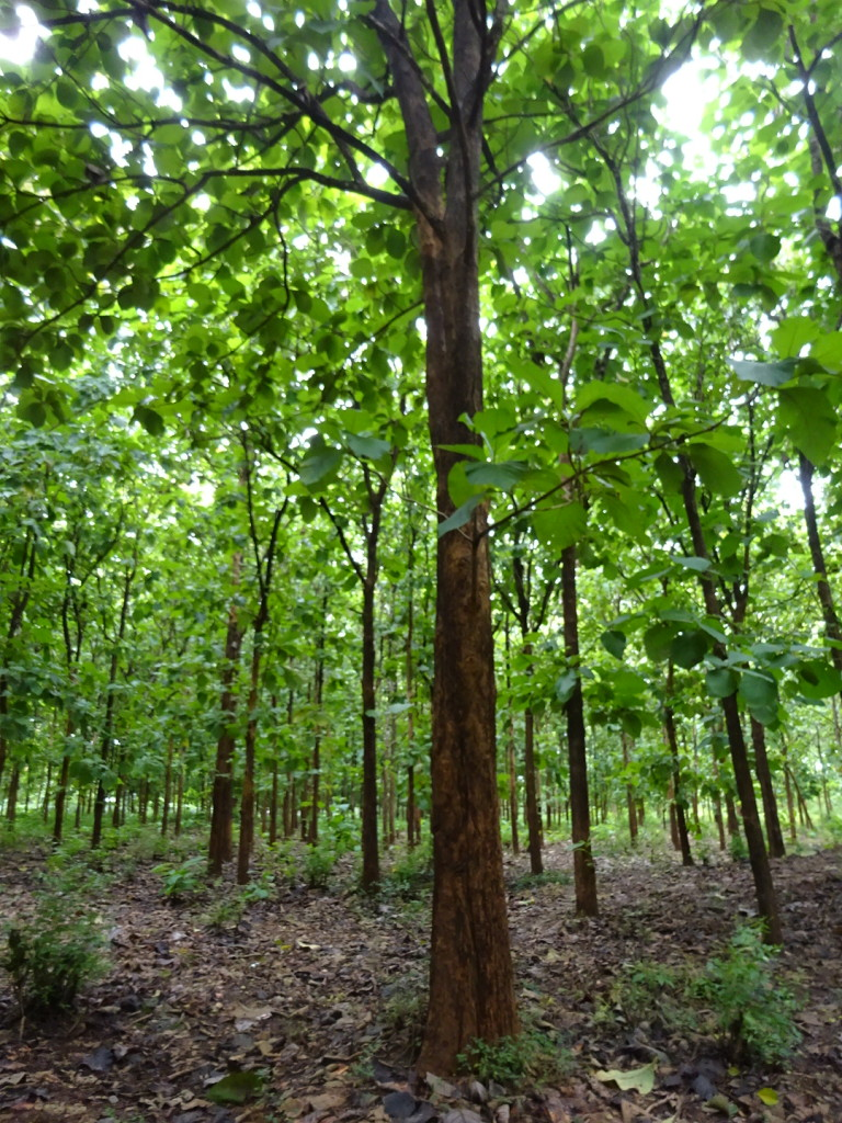 This forest is owned by the Amboni Corportation CHECK - but the peopel of Amboni get nothing from it. There was a lot of this sort of thing in TZ and it's one thing we really disliked.