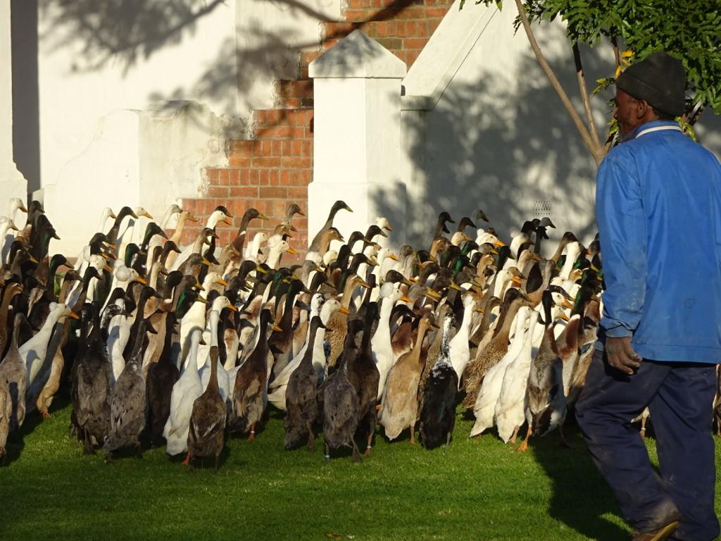 Duck Parade! 'nuf said.