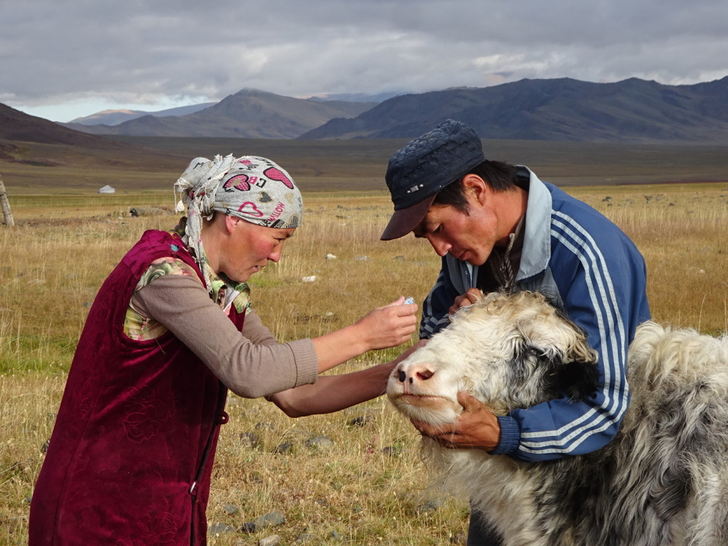 Everyone helps a yak with eye problems!