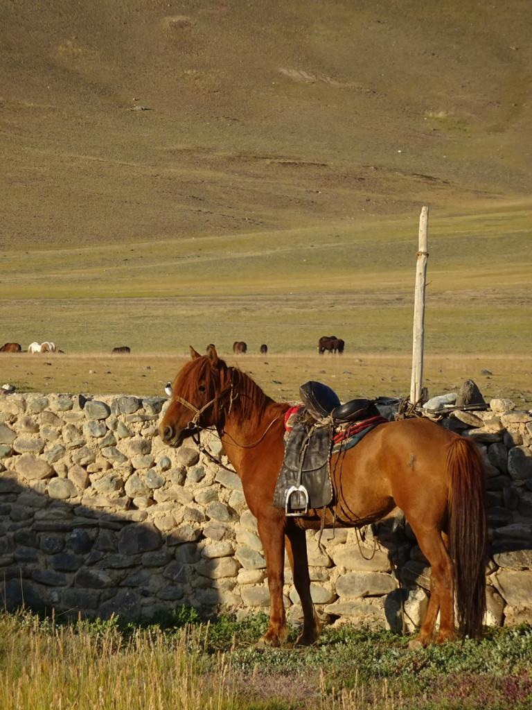 Our wrangler, Erlans, horse awaiting a ride.