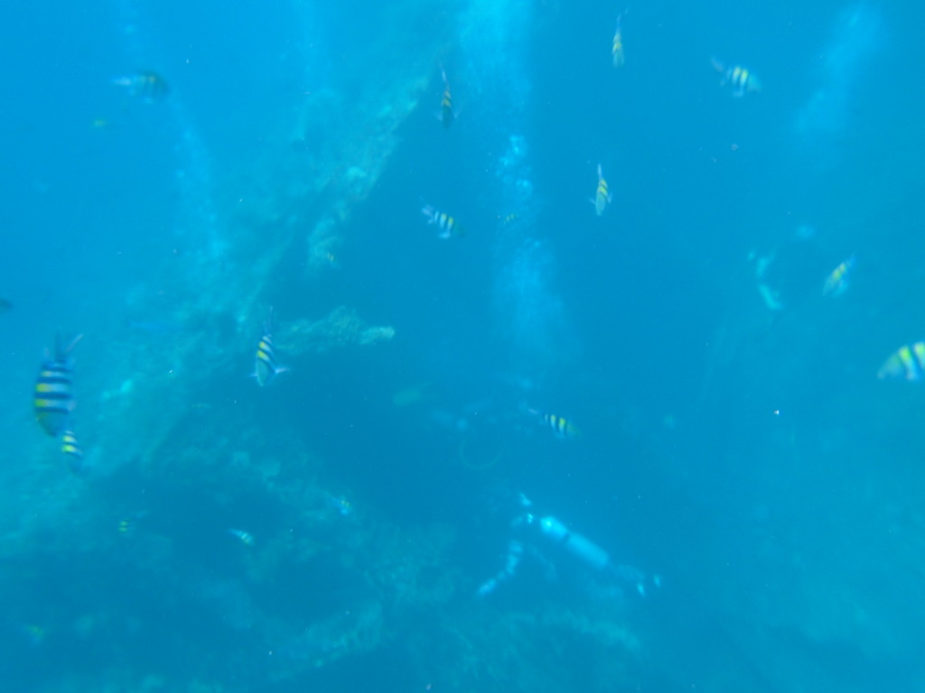 Fish, scuba divers and a sunken ship - pretty amazing!