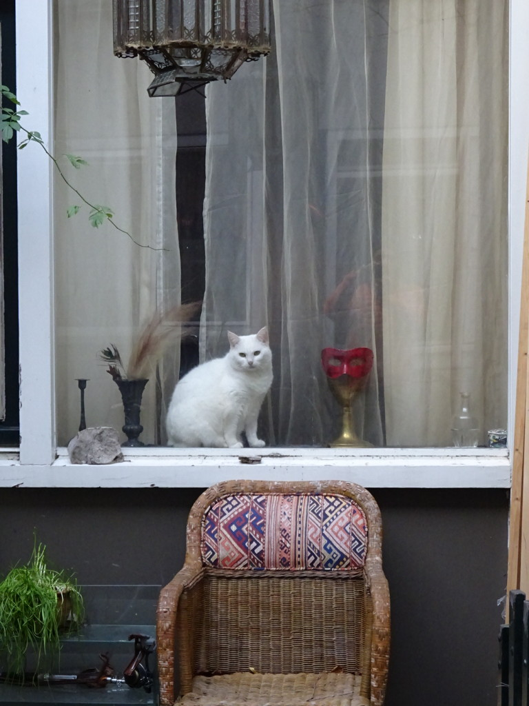 A lot to look at in this city. Cats and ladies in many-a-window.