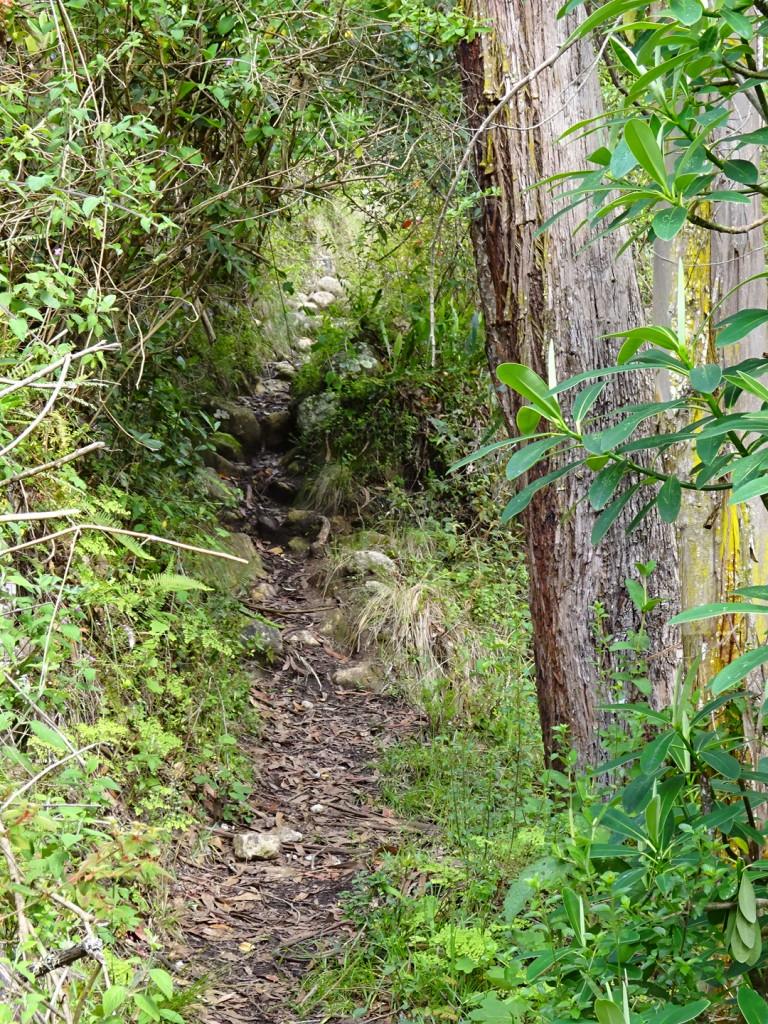 Path to the sheep...baaaa
