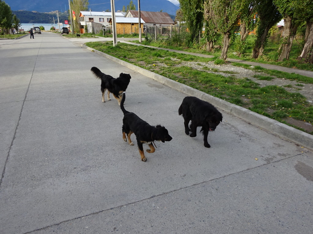 These dogs followed us for a while...and then slept on our door step.