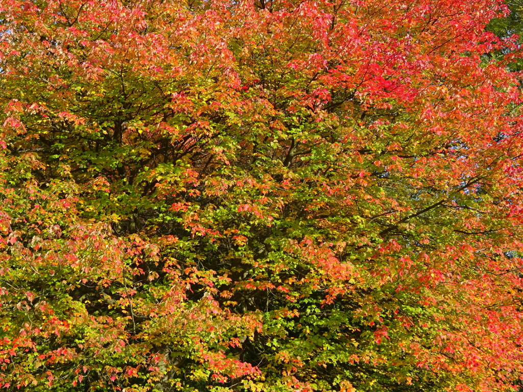 The fall colors were simply stunning. 'Nuf said.
