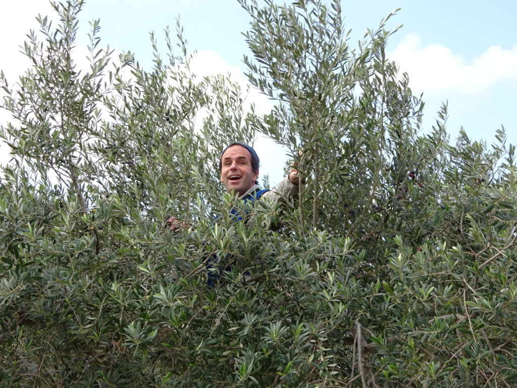 """It being the holiday season I was compelled to sing, """"Aaron in an olive treeeeee""""."""