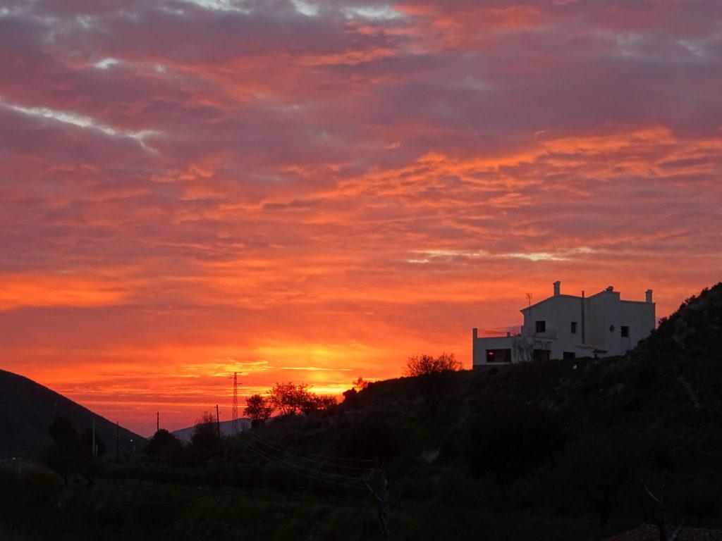 Morning walk with Cheech ...sunrises over the neighbor's house.